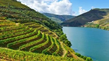 Ten IWSC-winning wines to be showcased at Wines of Portugal
