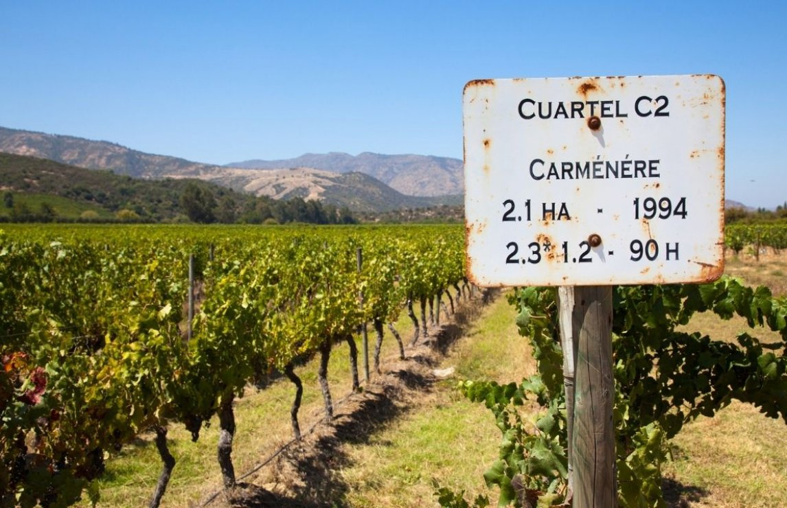 World's best Carmenère from Chile and Canada