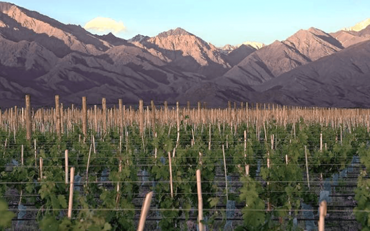 The Best Malbec in the World Revealed