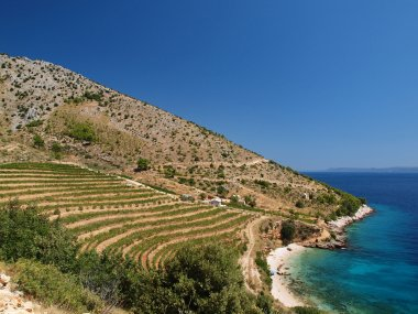 Top 5 Croatian wines
