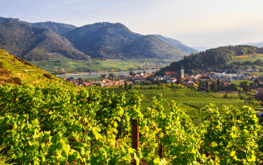 Top Austrian wines: from Grüner Veltiner to Riesling