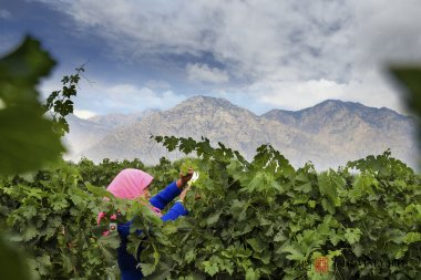 Wine Discovery 2019: Ningxia Jade Vineyard Winery