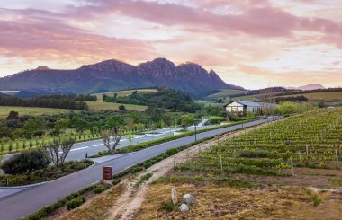 Top 10 South African red wines