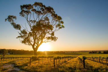 Australia's best red wines: Shiraz, Cabernet Sauvignon and Grenache