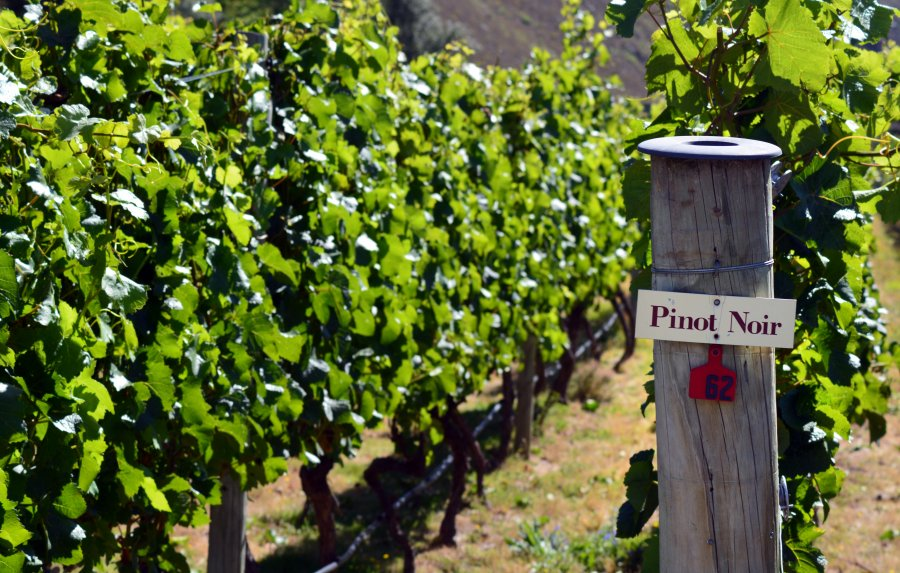 Five top-rated New World Pinot Noirs