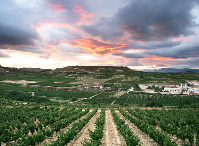Top 10 Spanish wines
