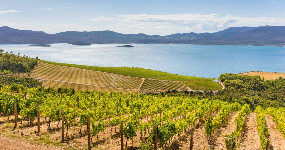 Vineyards on Dalmatian coast.jpg