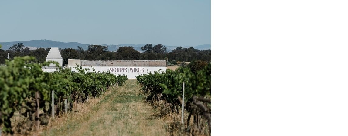 morris-wines-vineyard.jpg